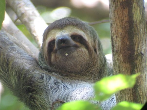 Visit Manuel Antonio National Park to make some animal friends.