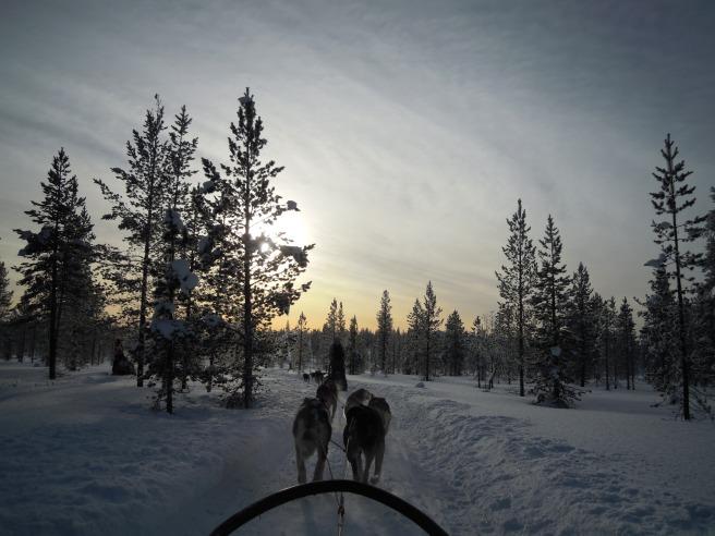 Finland_HuskySafari